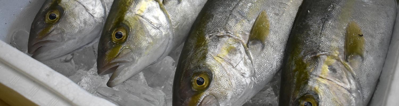 土屋鮮魚店についてトップ画像